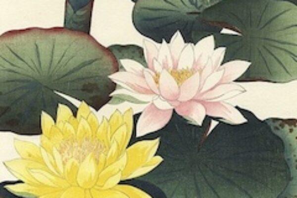 Illustrated lotus flowers - herbal dermatology