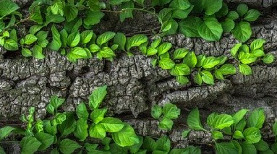 TSW:  When Should I Start Herbal Medicine?