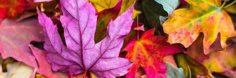 Colorful Fall Leaves - nummular eczema