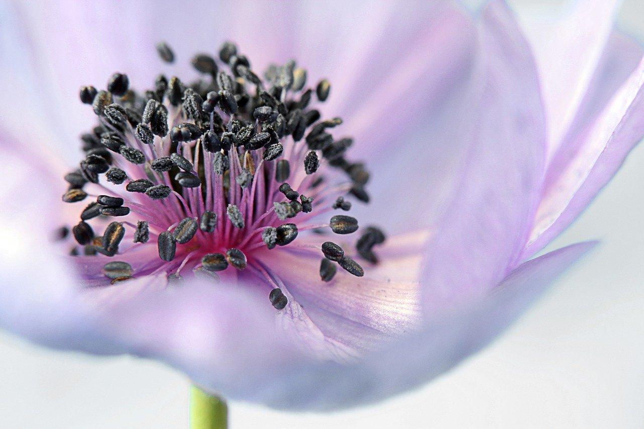 Image Flower: Skin Toner Facts