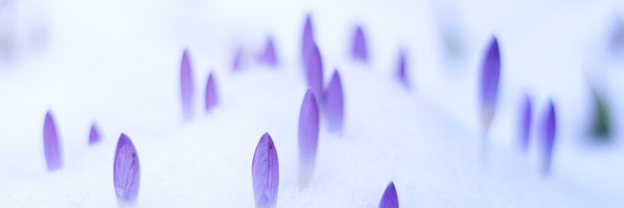 Crocuses sprouting in the snow - treating eczema